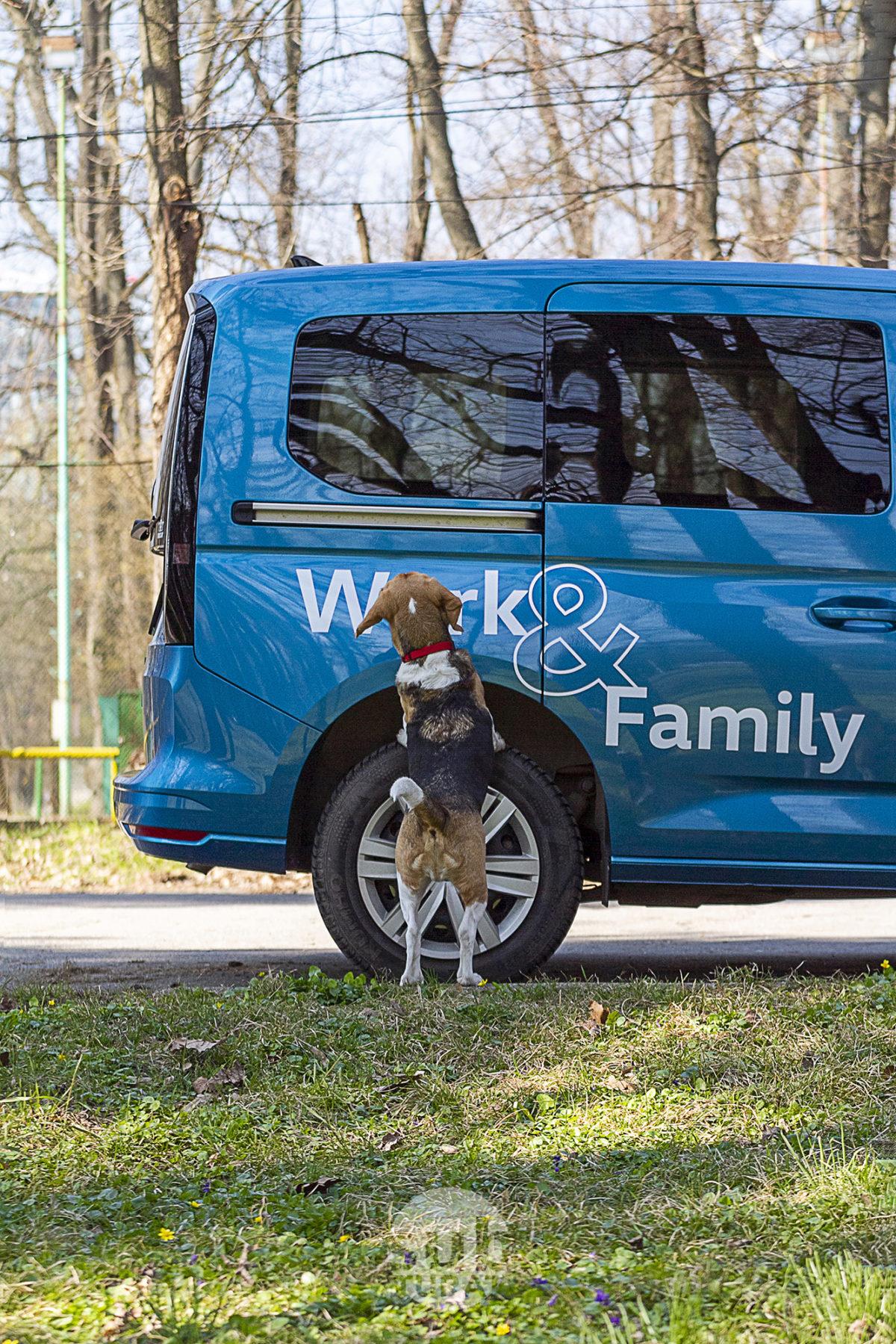 Dexter si Volkswagen Caddy
